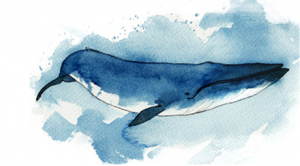 Blue Whale, Balaenoptera musculus. Artist: Ciaran Duffy. Courtesy of the Phylo project.